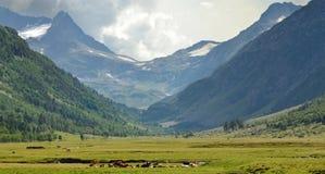 Valle en el Cáucaso foto de archivo libre de regalías