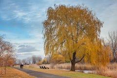 Valle en el parque de la ciudad Árboles amarillos Fotografía de archivo