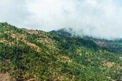 Valle en la niebla Fotos de archivo