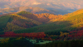 Valle en otoño con los árboles coloridos Fotografía de archivo libre de regalías