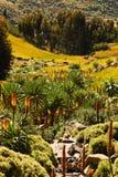 Valle in Etiopia. Fotografia Stock