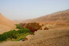 Valle fértil en el desierto Foto de archivo libre de regalías