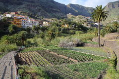 VALLE GRAN REY, LA GOMERA, SPAIN: Cultivated terraced fields and palm trees with Los Granados village on the left side Royalty Free Stock Image