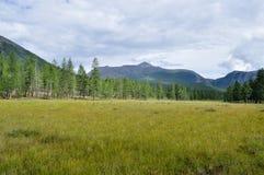 Valle herboso a lo largo del canto de la montaña. Fotografía de archivo
