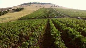 Valle hermoso con los viñedos, visión aérea de la montaña