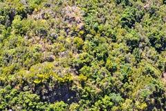 Valle in isole Canarie immagine stock libera da diritti