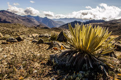 Valle La Toma Royaltyfri Foto