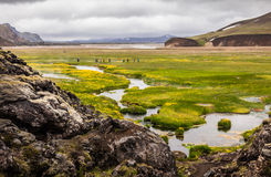 Valle Landmannalaugar in Islanda Fotografia Stock Libera da Diritti