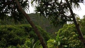 Valle Maui di Iao Fotografia Stock