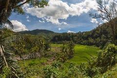Valle in montagne, isola del Flores Fotografie Stock