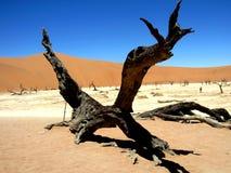 Valle morta della Namibia Vlei nel calore con il ceppo di albero fotografia stock