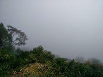 Valle nebbiosa con gli alberi ed il fondo nebbioso del cielo immagini stock libere da diritti
