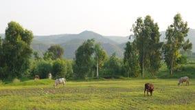 Valle nel Punjab Immagine Stock