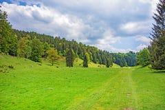 Valle, prato e foresta di Wental Immagini Stock