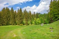 Valle, prato e foresta di Wental Immagine Stock