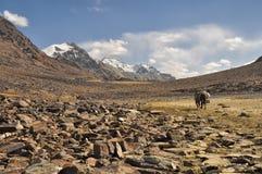 Valle árido en Tayikistán Imagenes de archivo
