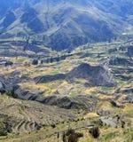 Valle sacra con i campi coltivati dell'agricoltore Immagine Stock Libera da Diritti
