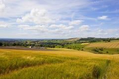 Valle scenica dei wolds di Yorkshire nell'estate Immagini Stock Libere da Diritti