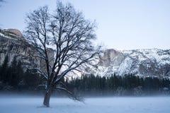 Valle solitario de Yosemite del árbol Foto de archivo libre de regalías