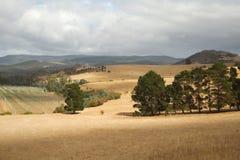 Valle in Tasmania Immagini Stock