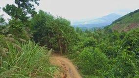 Valle tropical de la montaña del verde de la visión aérea cruzado por el rastro
