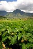 valle tropicale Fotografia Stock Libera da Diritti