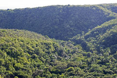 Valle tropicale in Cuba Immagine Stock Libera da Diritti