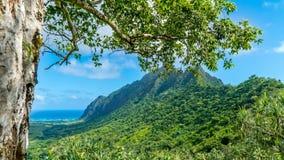 Valle tropicale di Kaaawa Fotografia Stock Libera da Diritti