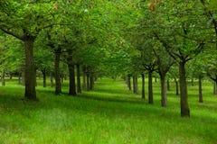 Valle verde Fotografia Stock Libera da Diritti