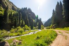 Valle verde con i pini ed il fiume Fotografia Stock