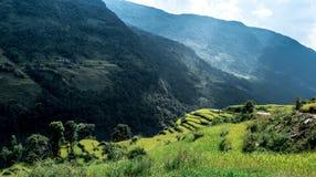 Valle verde con i terrazzi del riso, circuito di Annapurna, Nepal Fotografie Stock