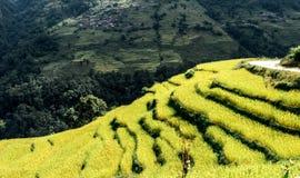 Valle verde con i terrazzi del riso, circuito di Annapurna, Nepal Immagini Stock