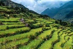 Valle verde con i terrazzi del riso, circuito di Annapurna, Nepal Fotografia Stock