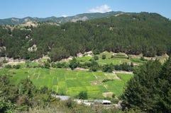 Valle verde cultivado al tabaco Fotos de archivo