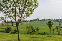 Valle verde de Toscana Imagen de archivo libre de regalías