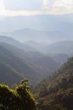 Valle verde dell'albero Immagini Stock