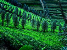 Valle verde della montagna Fotografia Stock