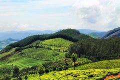 Valle verde fertile Fotografie Stock