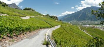 Valle Wallis de rhone de los viñedos de Saillon Imágenes de archivo libres de regalías