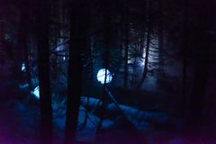 Free Vallea Lumina, The Multimedia Interactive Forest Walk In Whistler, BC Royalty Free Stock Photo - 168463555