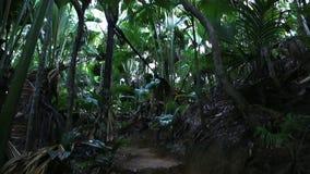 Vallee de Mai δάσος φοινικών σε Praslin φιλμ μικρού μήκους