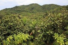 Vallee de Mai επιφύλαξη φύσης σε Praslin στοκ φωτογραφία