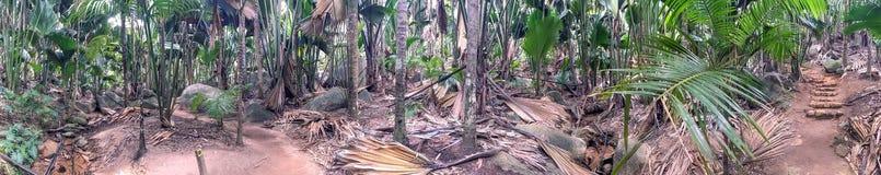 Vallee de Mai Natural Reserve, den Praslin panoramautsikten av gömma i handflatan fo royaltyfria bilder