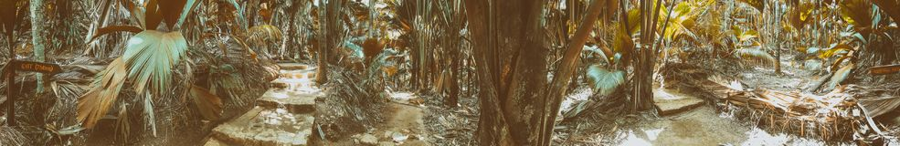 Vallee de Mai Natural Reserve, Praslin panoramic view of palm forest, Seychelles.  stock image