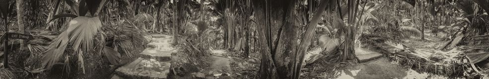Vallee de Mai Natural Reserve, Praslin panoramic view of palm forest, Seychelles.  stock images