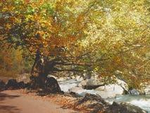 Vallei Bujaruelo, dichtbij Nationaal Park van Ordesa stock foto
