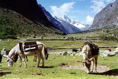 Vallei in de Andes stock afbeelding
