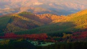 Vallei in de herfst met kleurrijke bomen Royalty-vrije Stock Fotografie
