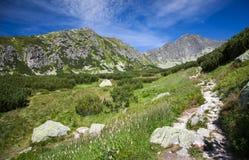 Vallei in Hoge Tatras, Slowakije Royalty-vrije Stock Afbeelding