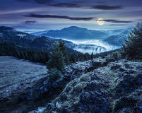Vallei met naaldboom boshoogtepunt van mist in berg bij nacht Stock Foto's